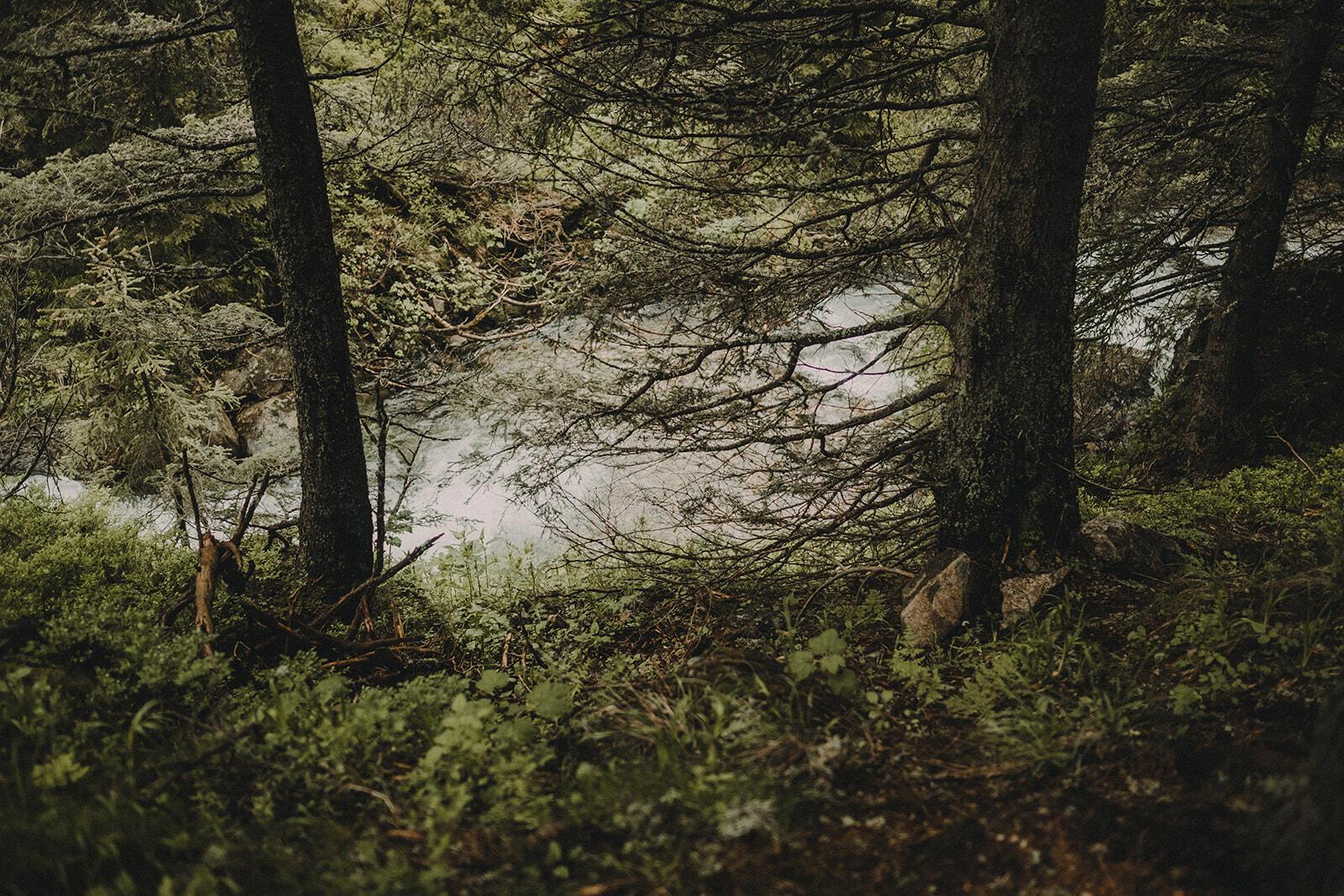фотосесия в гората
